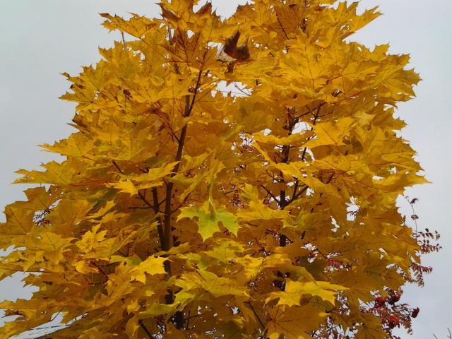 золотая осень.jpg
