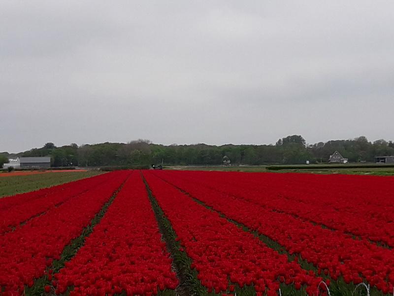 holland064.jpg